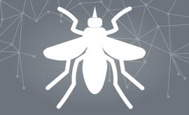 Dengue: Como combater
